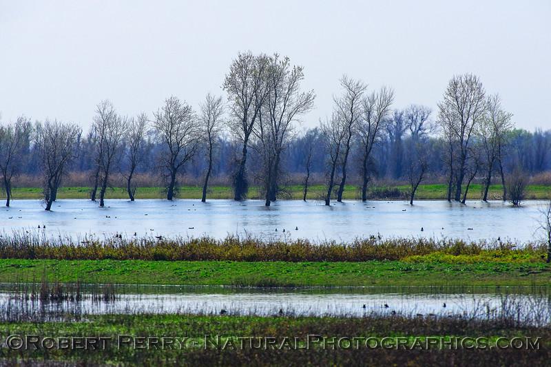 Llano seco wetlands scene