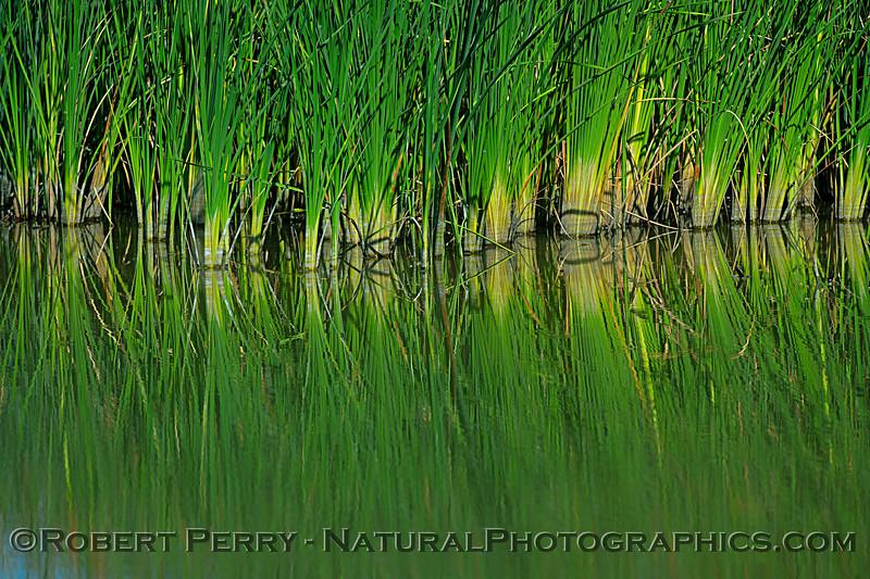 More estuarine reflections