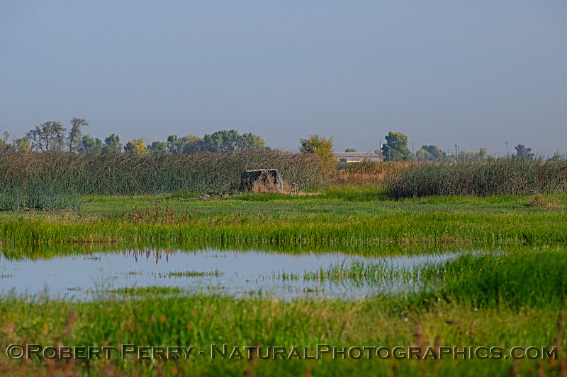 wetland scenery photographers blind 2018 10-31 Merced NWR-b-002