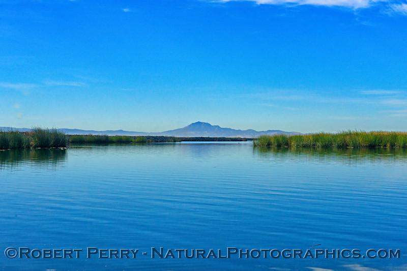 Wetlands with Mt. Diablo in background