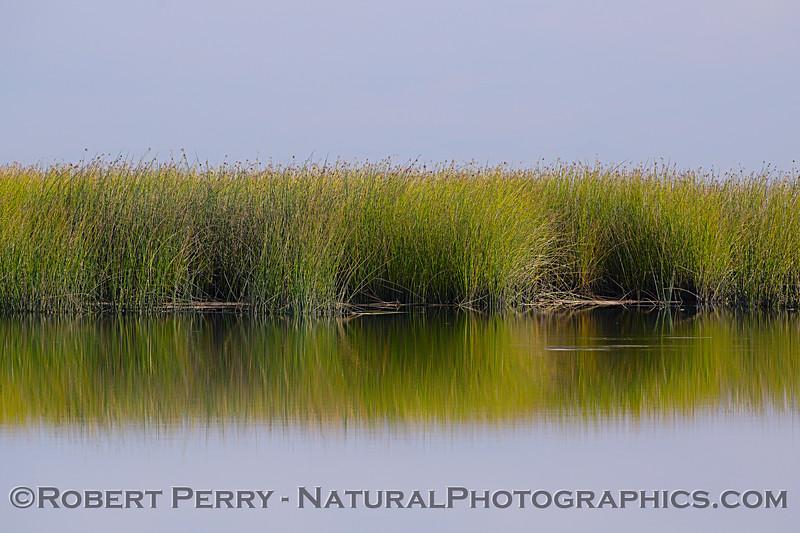wetlands tule reeds - reflections