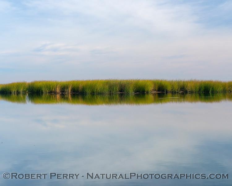 Creamy/dreamy wetlands scenery.