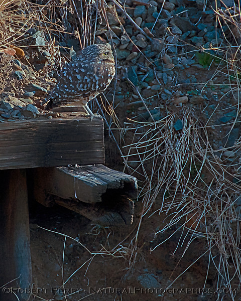 Our owl was first seen this season on November 1st.
