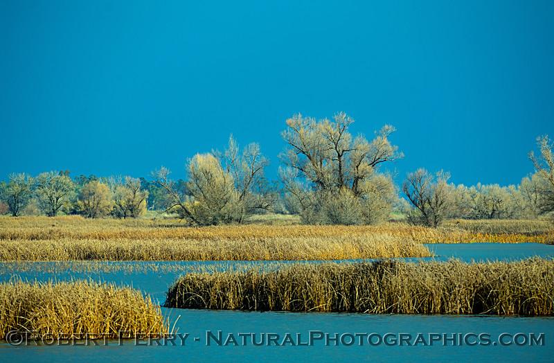 wetlands scenery trees dark sky 2019 01-17 Sac NWR--013