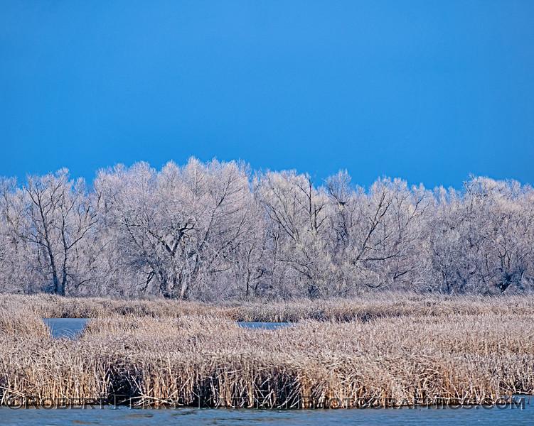 wetlands scenery trees dark sky 2019 01-17 Sac NWR--001