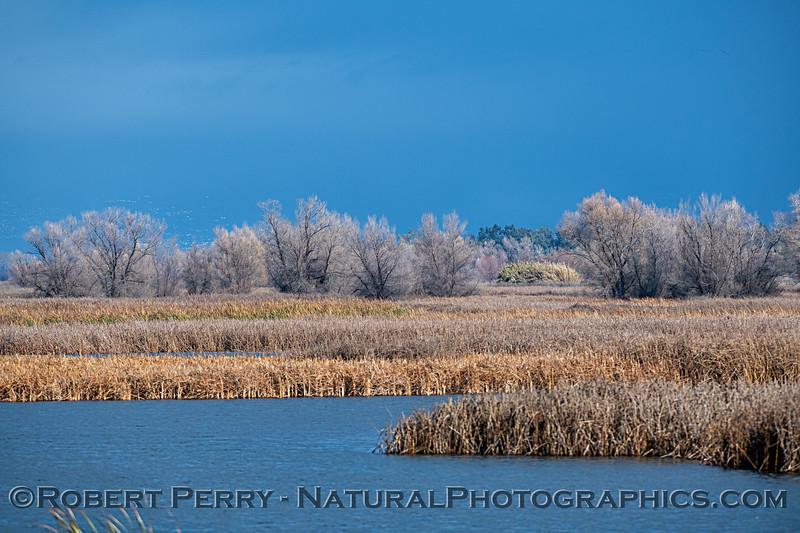 wetlands scenery trees dark sky 2019 01-17 Sac NWR--009