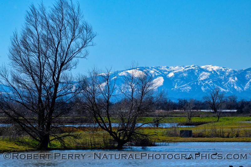 scenery & Snow Mountain 2019 02-18 Llano Seco--002