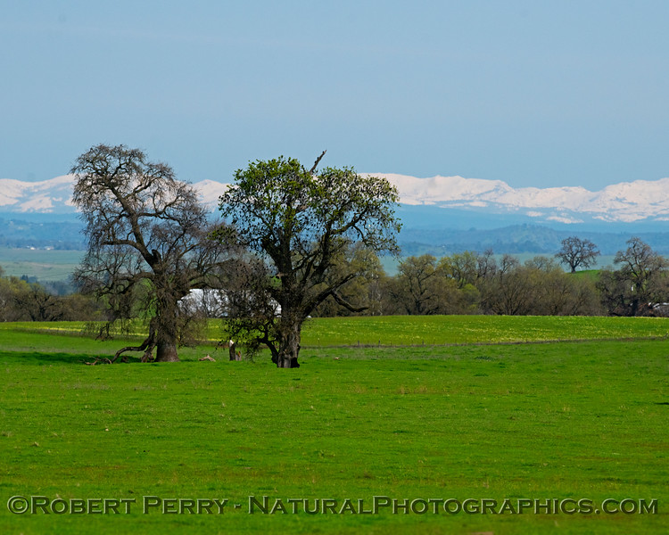 Pasture lands, trees with blackbirds, and snow in the high Sierra.
