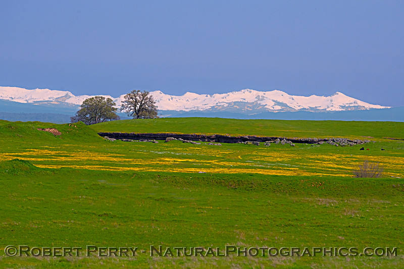 grasslands and Sierra snow in back 2019 03-25 Meiss Rd-b-005