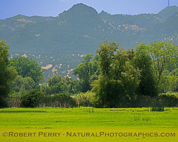 The Sutter Buttes are in the background, looking south across a green meadow.