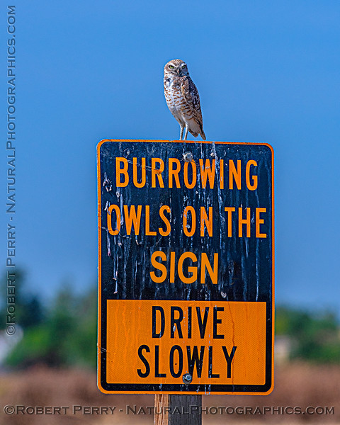 Owl on my modified humor sign