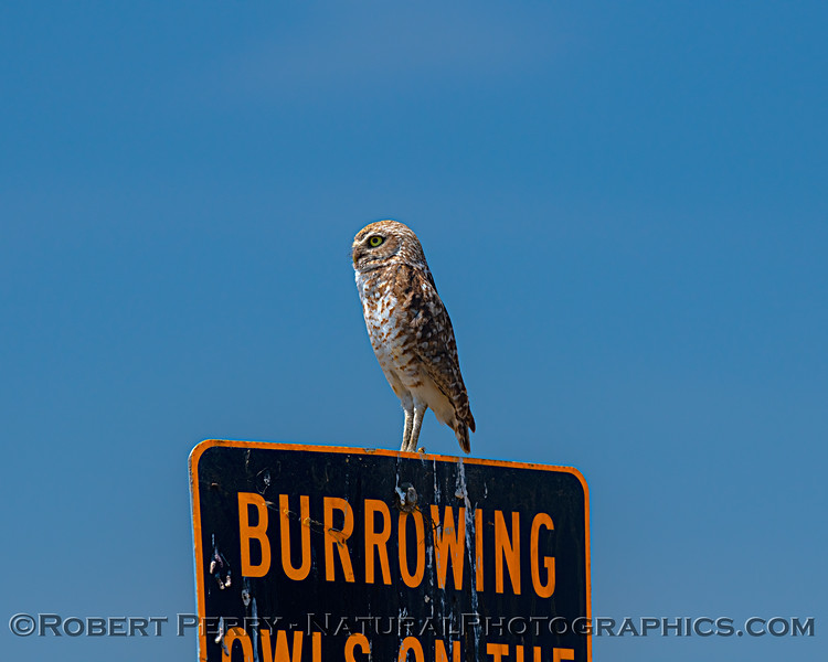 Owl on sign