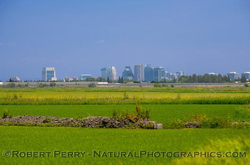 Rice fields west of downtown Sacramento.