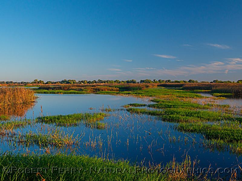 wetlands morning scenery 2019 10-04 Merced NWR-b-007