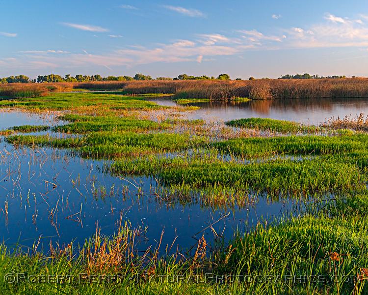 wetlands morning scenery 2019 10-04 Merced NWR-b-002
