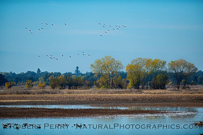 Wetlands scene, Llano Seco