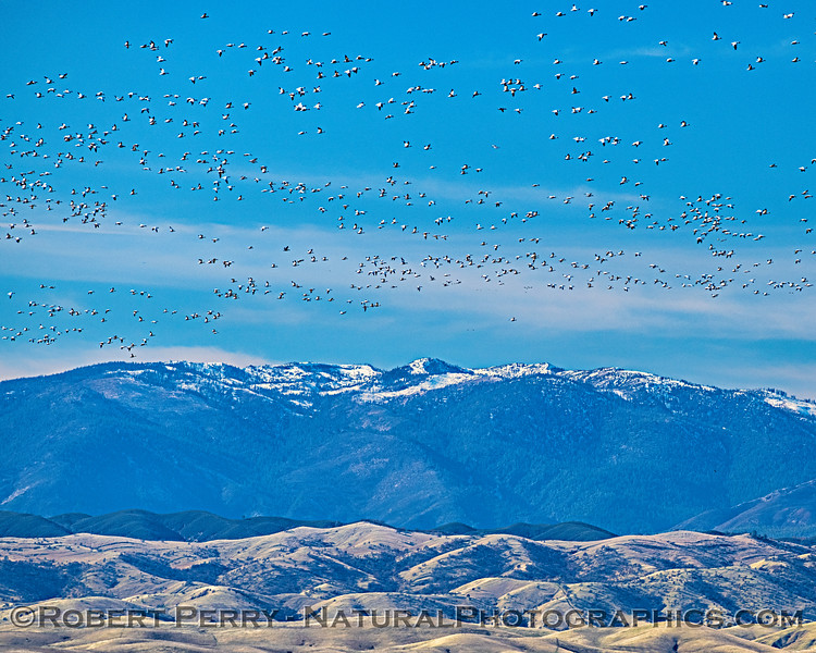 Snow: geese and Mountain.