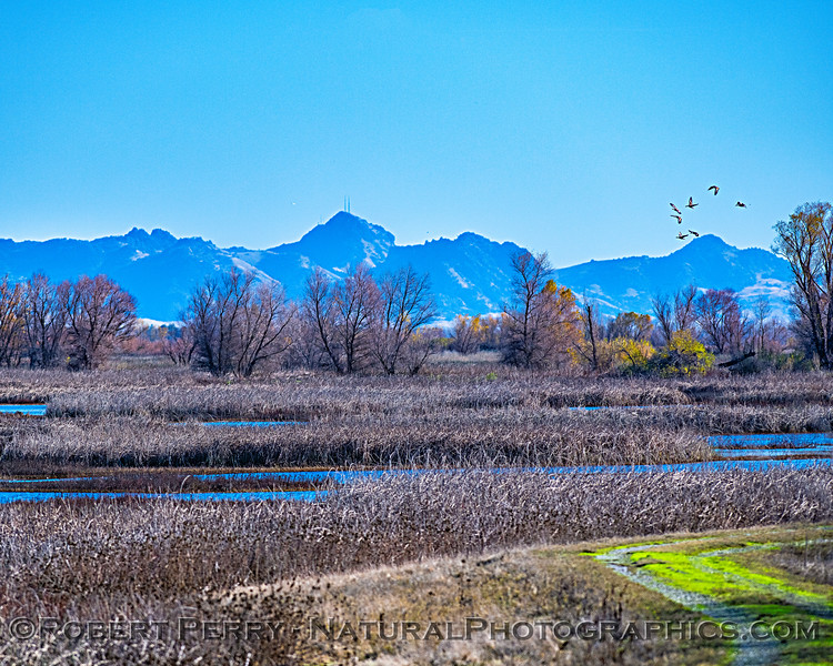 Sutter Buttes and the refuge wetlands