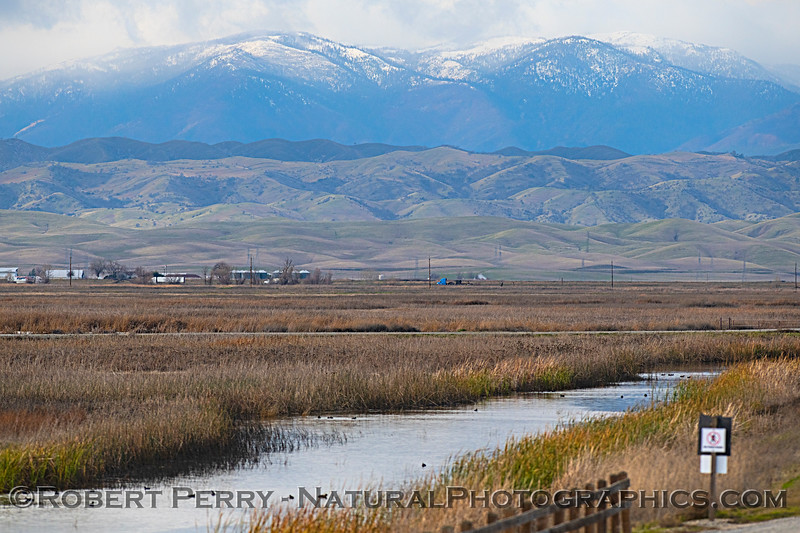 wetlands scenery with Snow Mountain in back 2020 01-14 Sac NWR--002