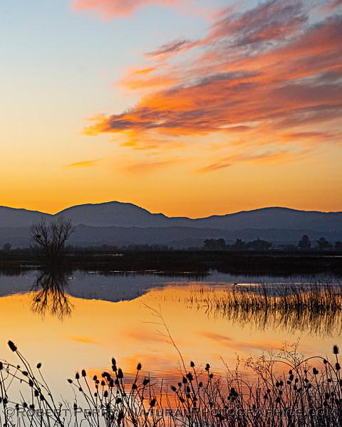 wetlands sunset VERTICAL 2020 02-18 Sunset Sac NWR-b-285