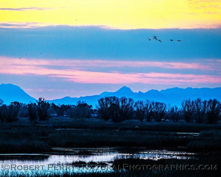 Sunrise wetlands Sutter Buttes in background 2020 02-18 Sunrise Sac NWR-o-073