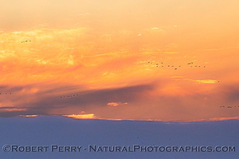 Sunrise sky with geese flocks 2020 02-18 Sunrise Sac NWR-o-149