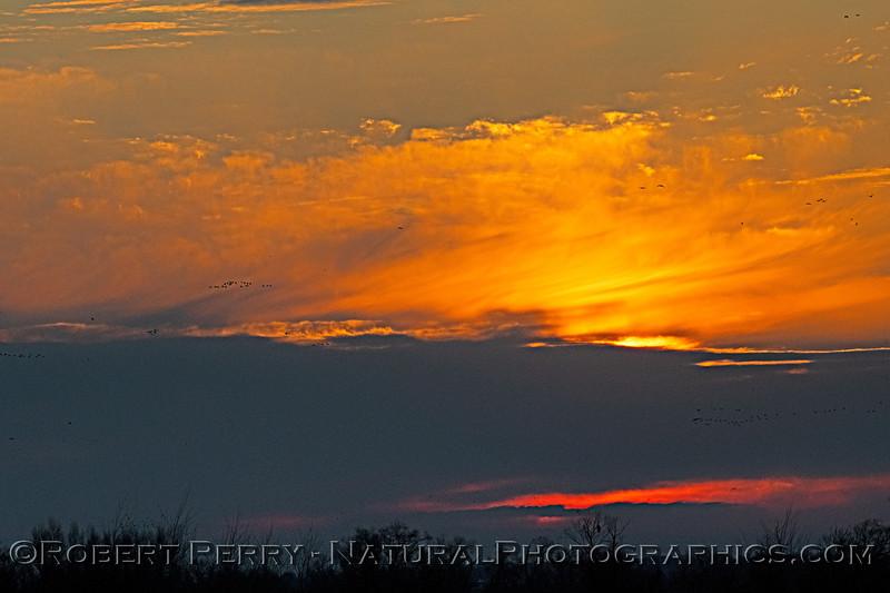 Sunrise 2020 02-18 Sunrise Sac NWR-o-239