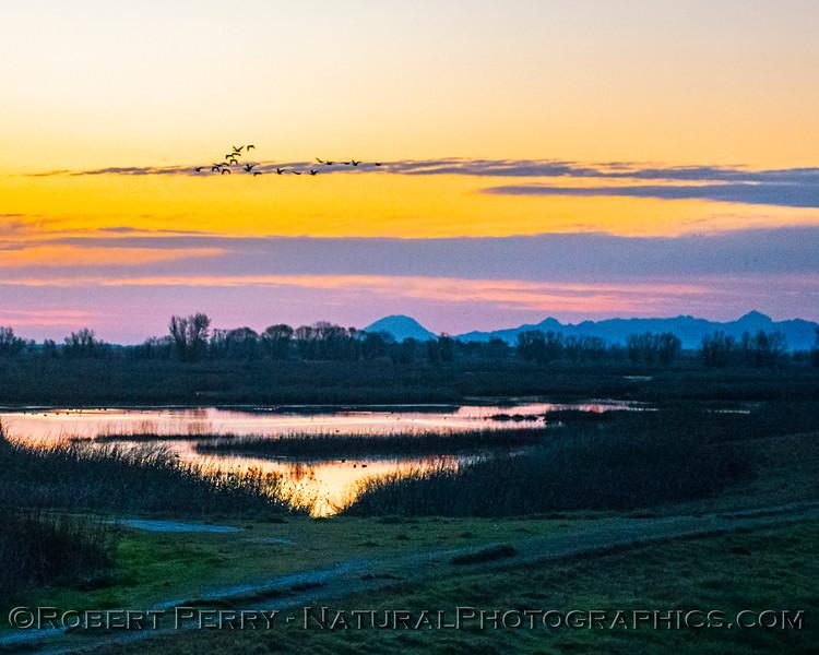 Sunrise wetlands Sutter Buttes & geese in background 2020 02-18 Sunrise Sac NWR-o-025