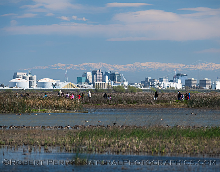 Sactown skyline with Sierra snow as seen from the wetlands with students on a field trip.