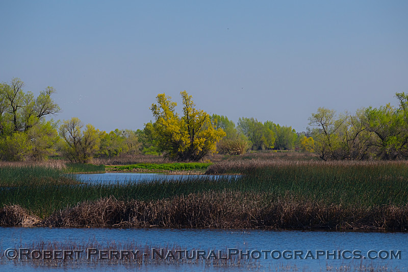 Early spring in the wetlands.