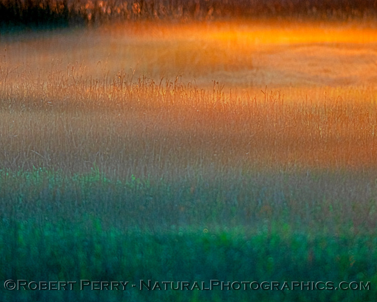 sunrise ground fog abstract in the wetlands 2020 03-20 Yolo ByPass--019