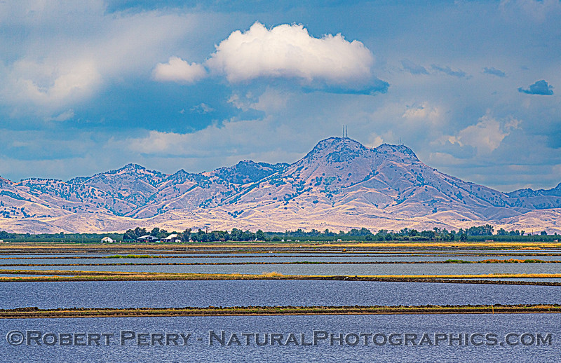 Sutter Buttes in the distance as seen across the sushi rice ponds.