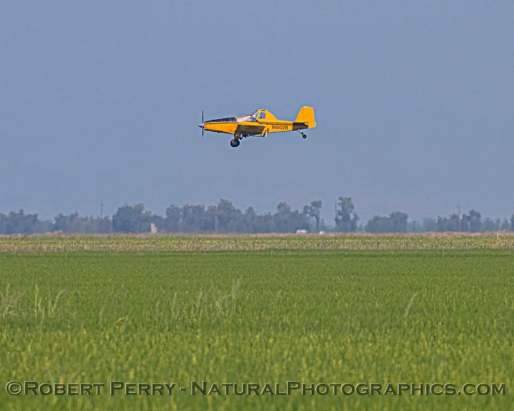 airplane Ayers 1993 & Oryza sativa Rice fields 2020 08-07 Colusa--003
