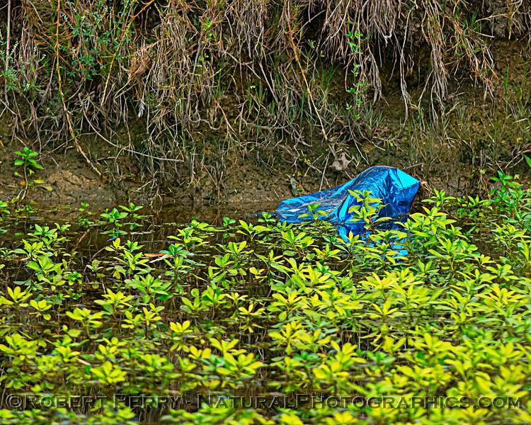 Deadly Mylar balloon debris in the wetlands.