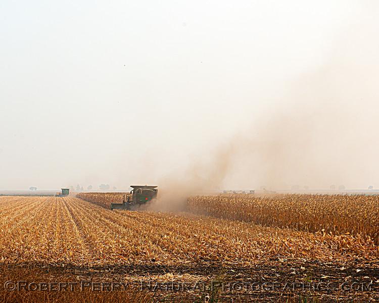 Corn stalk harvesting