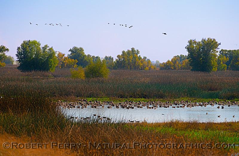 wetlands scenery