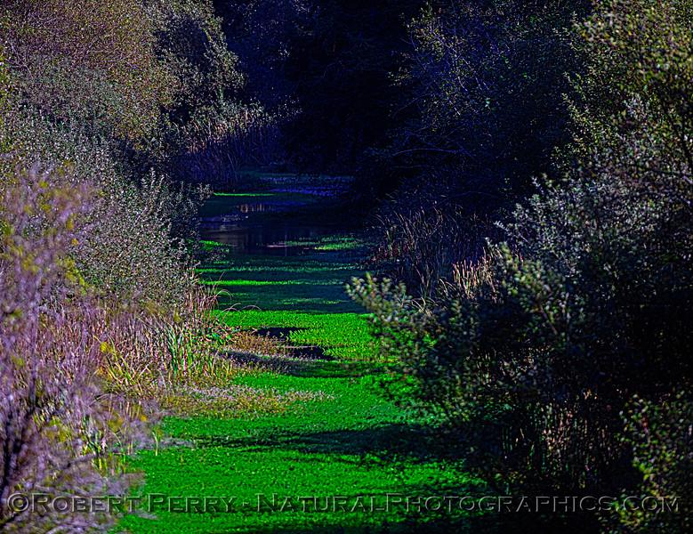 Pudding Creek 2020 10-21 Ft Bragg-027