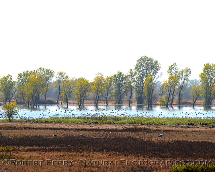 wetlands scenery 2020 10-29 Llano Seco-b-020