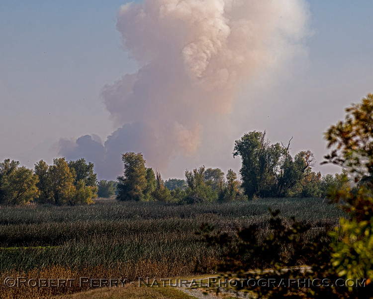 Chen caerulescens masses & ag smoke 2020 11-04 Sac NWR-002