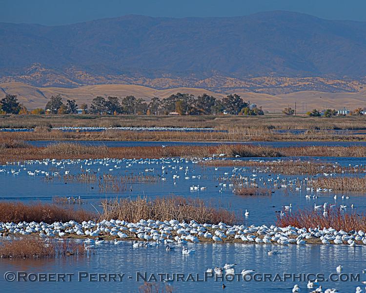 wetlands scenery 2020 12-01 Sac NWR--012