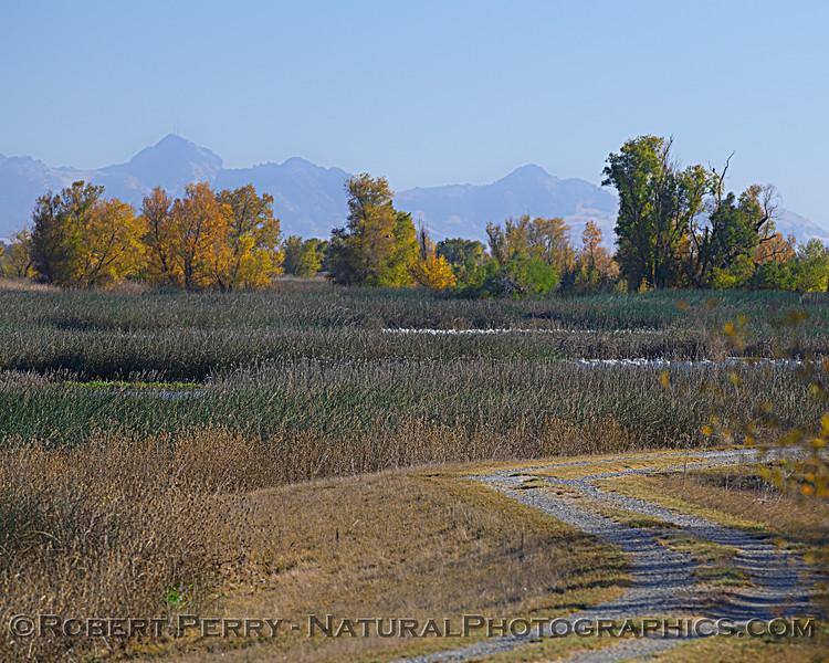 wetlands scenery 2020 12-01 Sac NWR--001