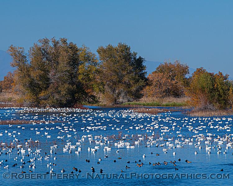 wetlands scenery 2020 12-01 Sac NWR--037