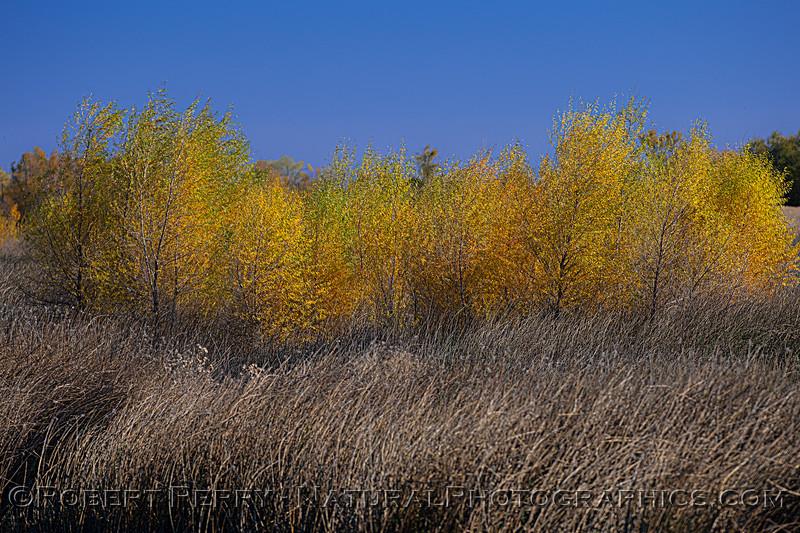 wetlands scenery 2020 12-01 Sac NWR--007