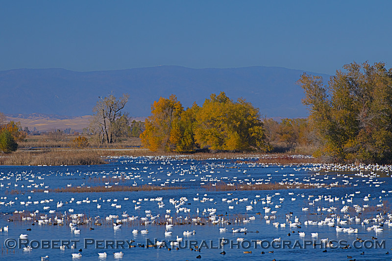 wetlands scenery 2020 12-01 Sac NWR--029