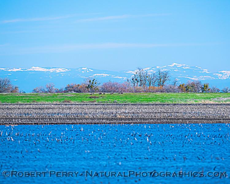 snow in Sierras wetlands scenery 2021 02-04 Staten Isl--003