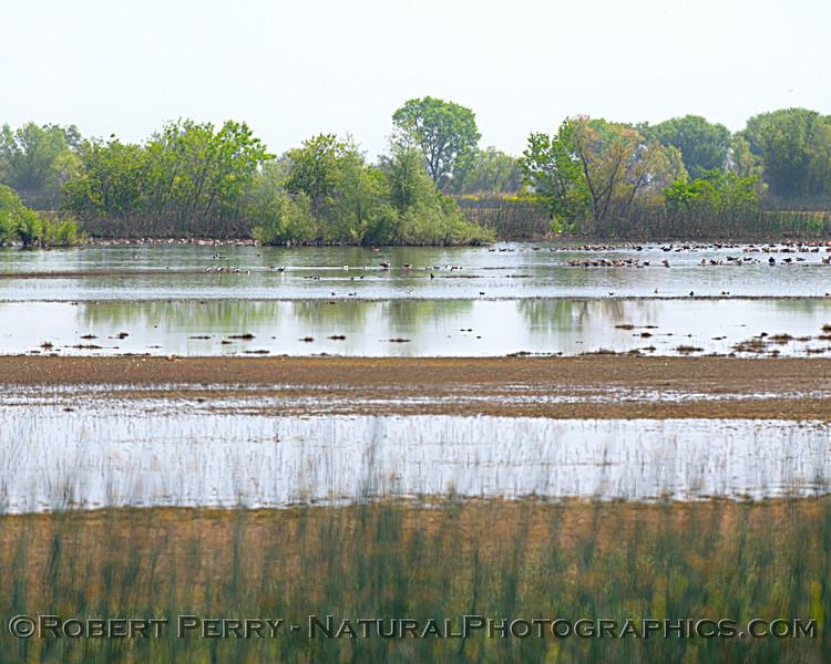 wetlands scene 2021 04-20 Sac NWR-001