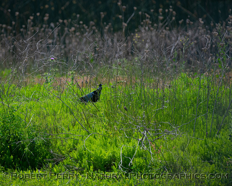 """A challenging photographic subject """"hides"""" in the brush."""