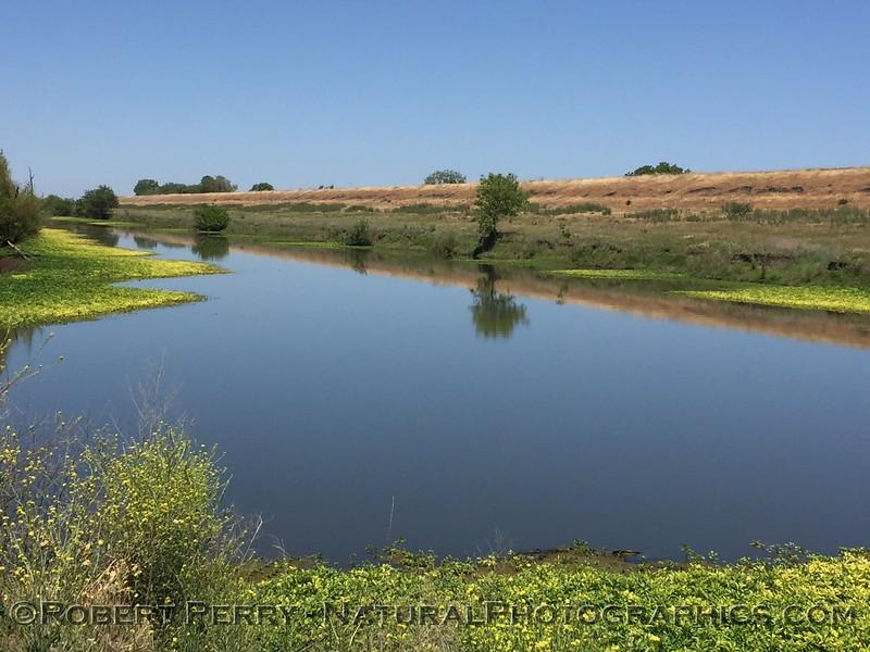 wetlands scenery 2021 05-01 Yolo Cnty-004