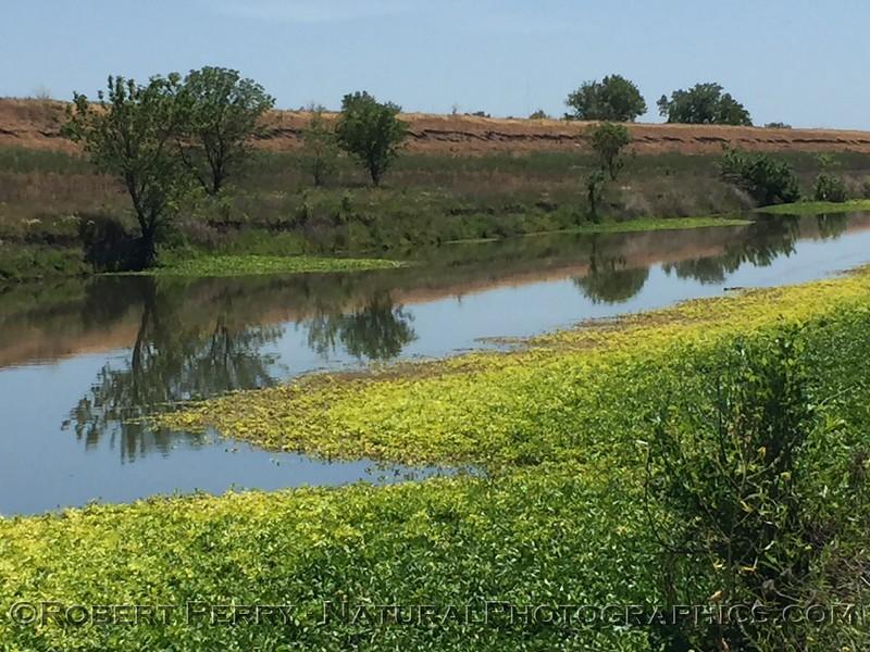 wetlands scenery 2021 05-01 Yolo Cnty-001
