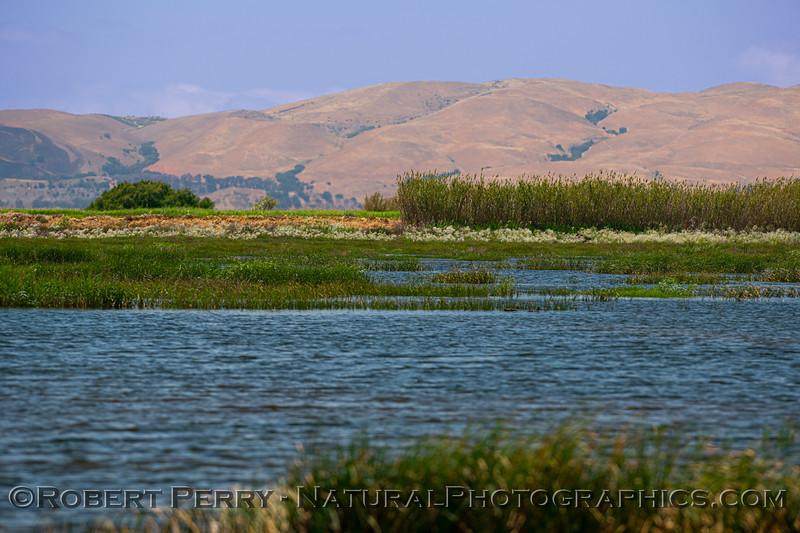 wetlands scene